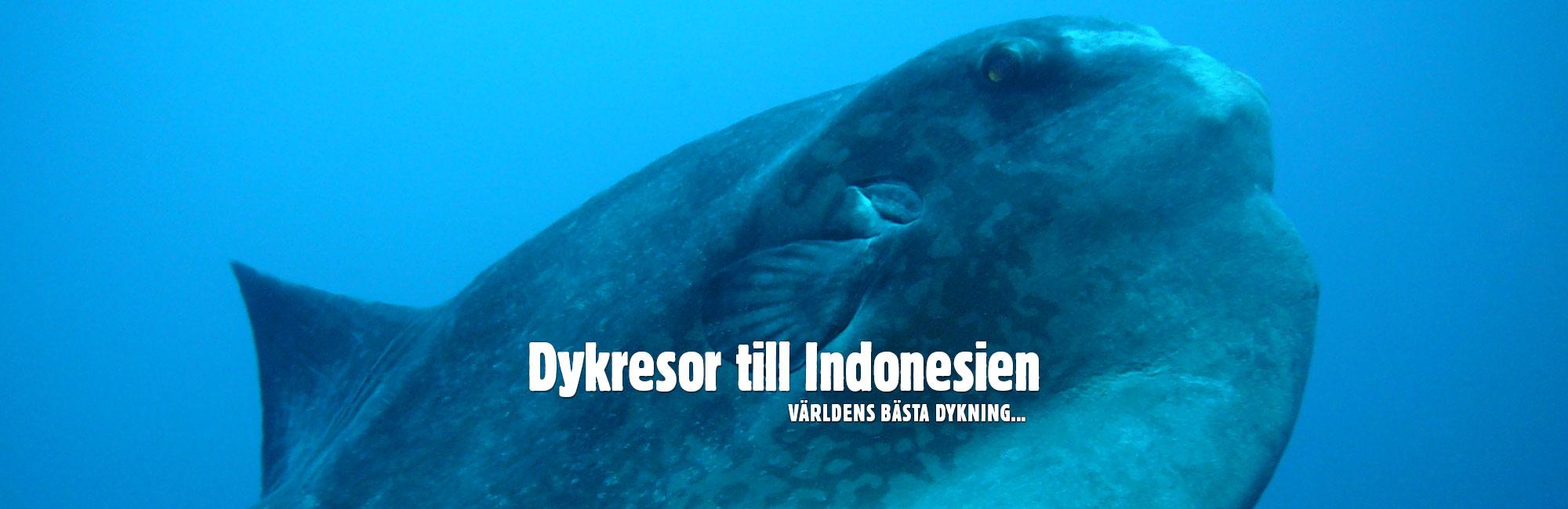Bali dykning